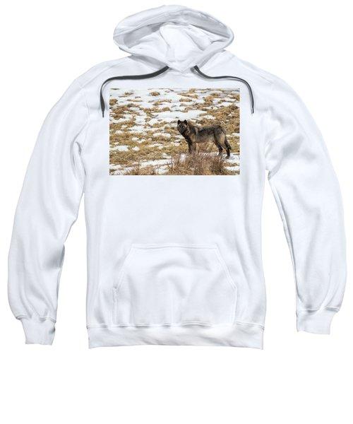 W59 Sweatshirt