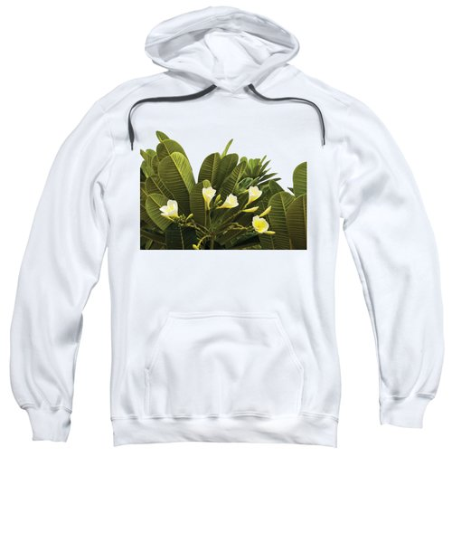 Yellow Flowers With Dark Leaves Sweatshirt