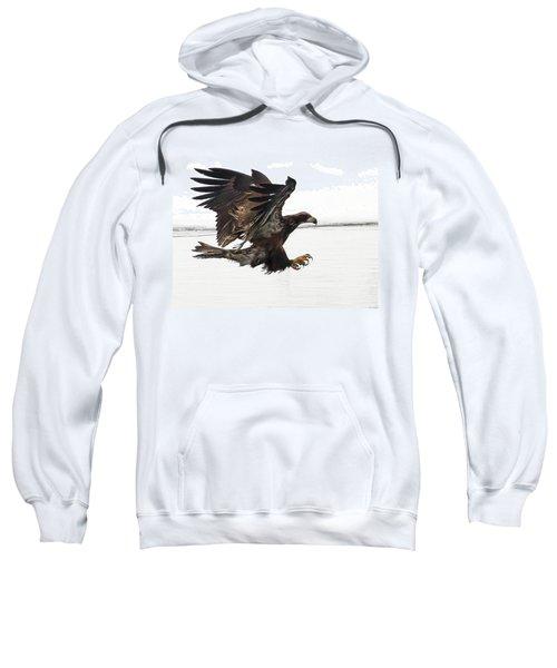 Young Bald Eagle Sweatshirt