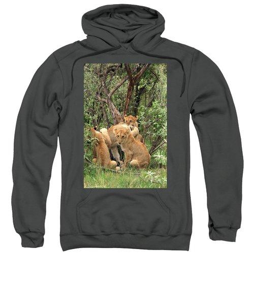 Masai Mara Lion Cubs Sweatshirt