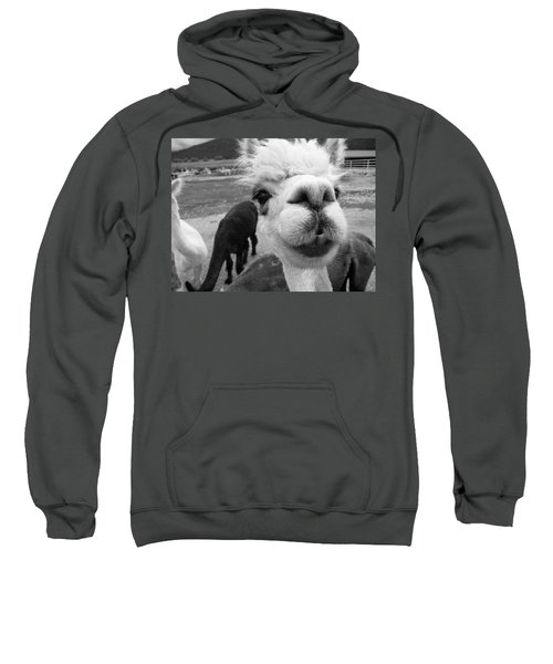Alpaca Face Sweatshirt