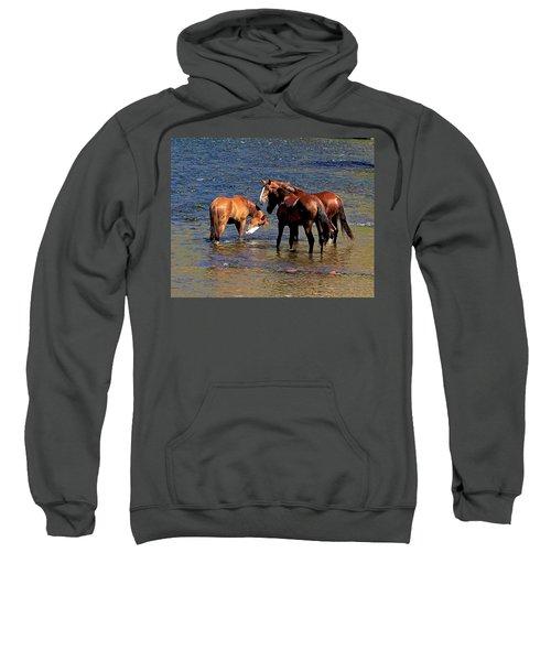 Arizona Wild Horses On The Salt River Sweatshirt