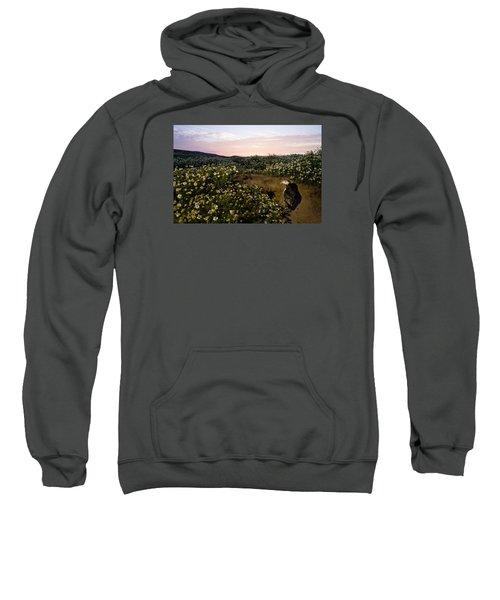 Atlantic Puffin At Burrow Skomer Island Sweatshirt