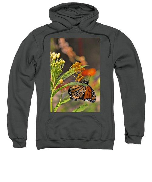 Clinging Butterfly Sweatshirt