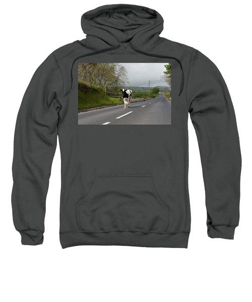 Cow Walks Along Country Road Sweatshirt