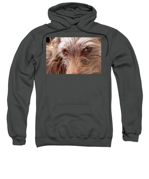 Dog Stare Sweatshirt