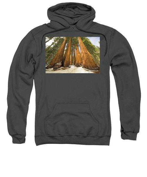 Giant Sequoias Sequoia N P Sweatshirt