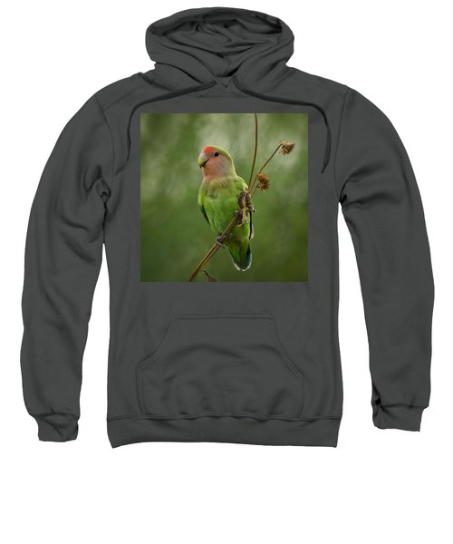 Lovely Little Lovebird  Sweatshirt by Saija  Lehtonen