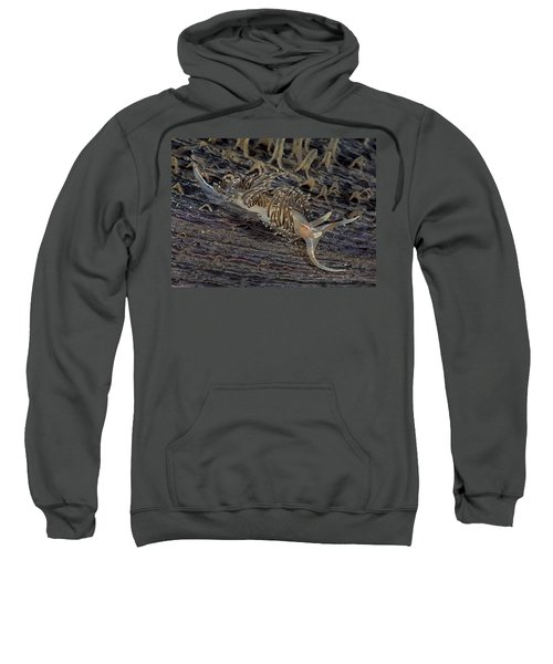 Nudibranch Sitting On A Pen Shell Sweatshirt