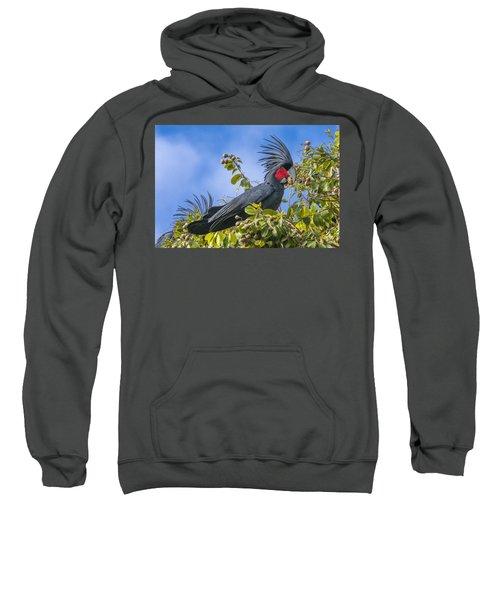Palm Cockatoo Male Feeding On Nonda Sweatshirt