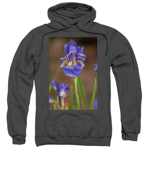Purple Bearded Iris Sweatshirt