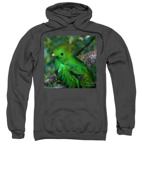 Quetzal Sweatshirt