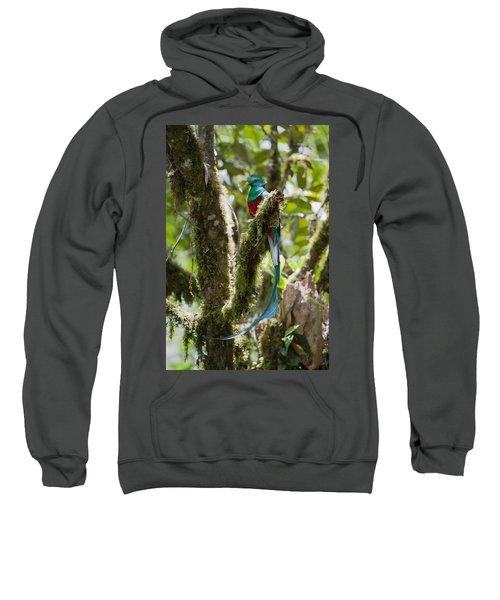 Resplendent Quetzal Male Costa Rica Sweatshirt