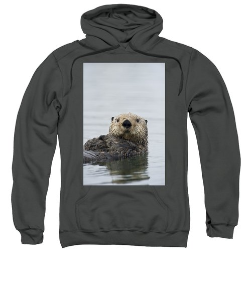 Sea Otter Alaska Sweatshirt by Michael Quinton