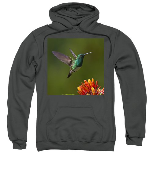 Snowy-bellied Hummingbird Sweatshirt