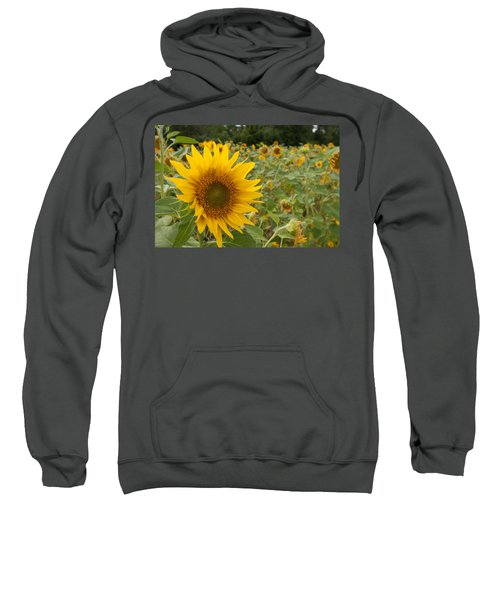 Sun Flower Fields Sweatshirt