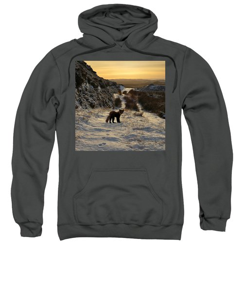 The Pine Marten's Path Sweatshirt
