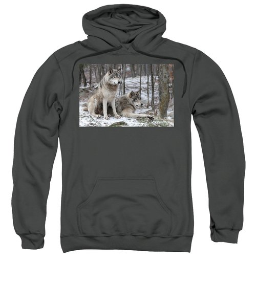 Timber Wolf Pair In Forest Sweatshirt