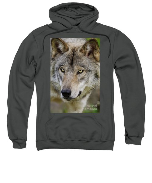 Timber Wolf Portrait Sweatshirt