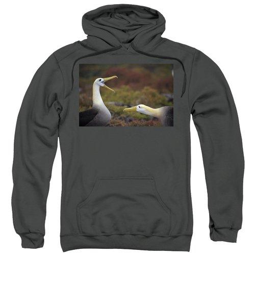 Waved Albatross Courtship Display Sweatshirt by Tui De Roy