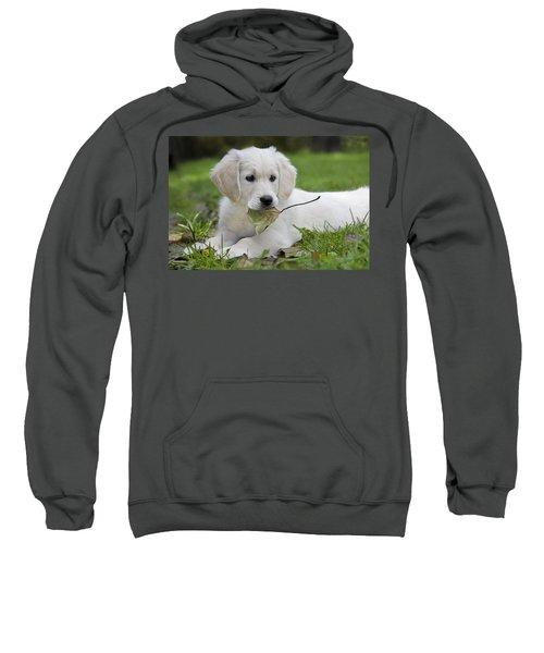101130p064 Sweatshirt