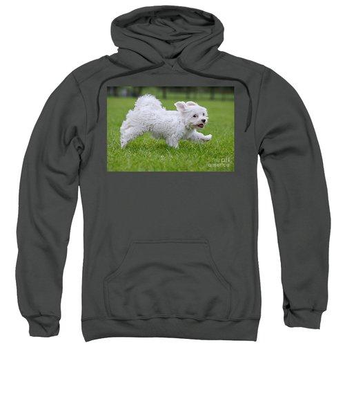 110801p130 Sweatshirt