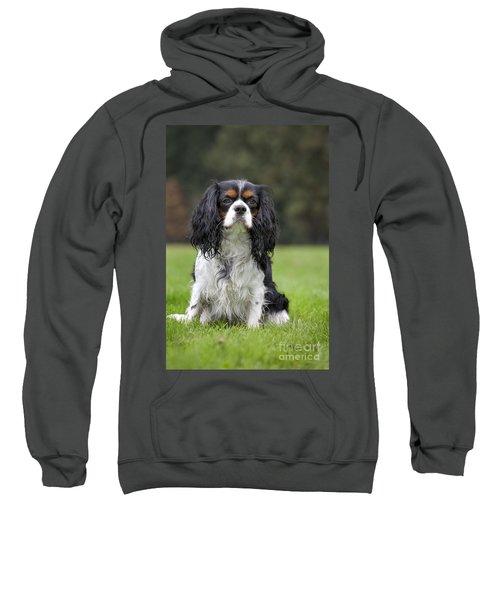 111216p255 Sweatshirt
