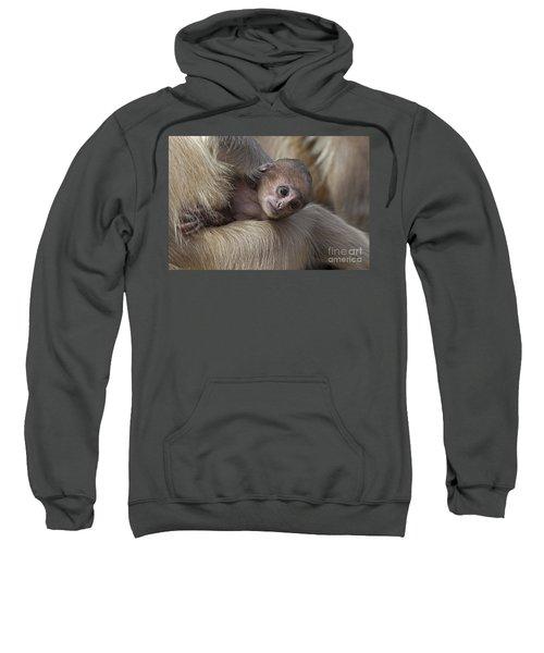 120820p269 Sweatshirt