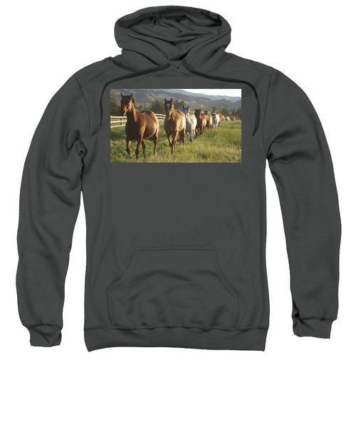 Montana  Big Sky Sweatshirt