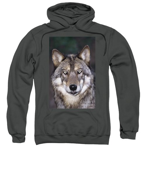 Gray Wolf Portrait Endangered Species Wildlife Rescue Sweatshirt