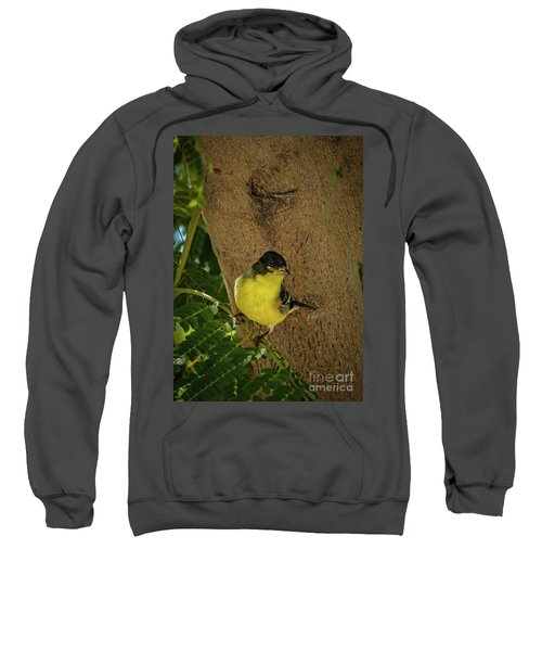 Lesser Goldfinch Sweatshirt