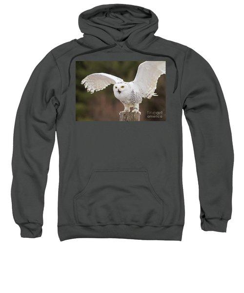 Snowy Owl Sweatshirt