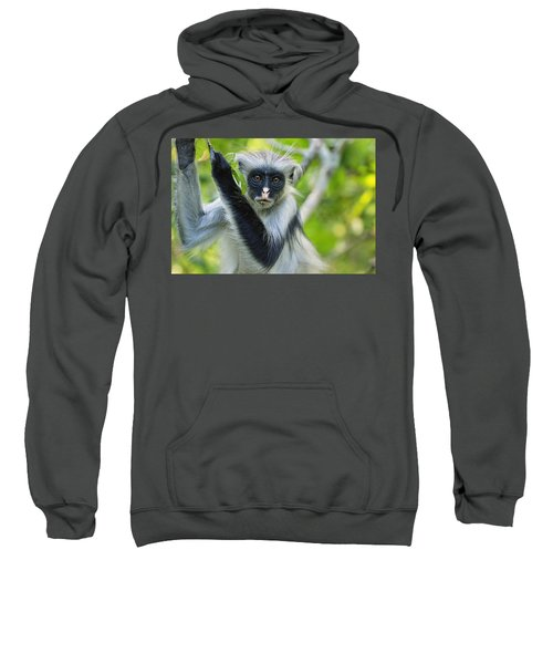 Zanzibar Red Colobus In Tree Jozani Sweatshirt
