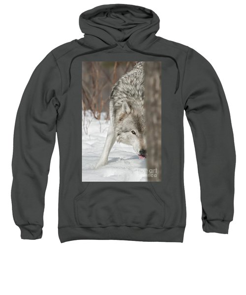 Timber Wolf Pictures Sweatshirt