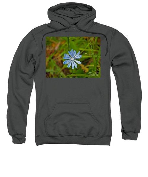 Blue Chicory Flower  Sweatshirt