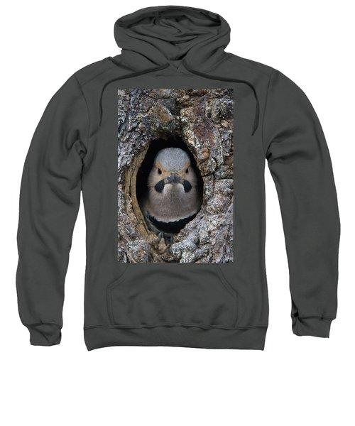 Northern Flicker In Nest Cavity Alaska Sweatshirt