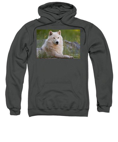 Arctic Wolf Sweatshirt