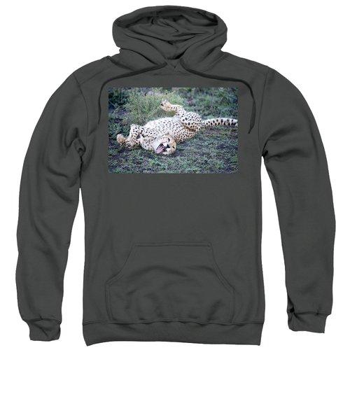 Cheetah Acinonyx Jubatus Resting Sweatshirt