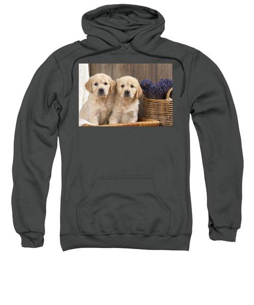 Golden Retriever Puppies Sweatshirt