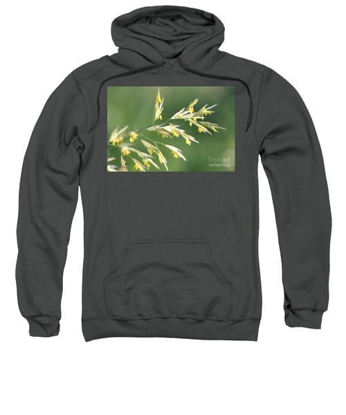Flowering Brome Grass Sweatshirt
