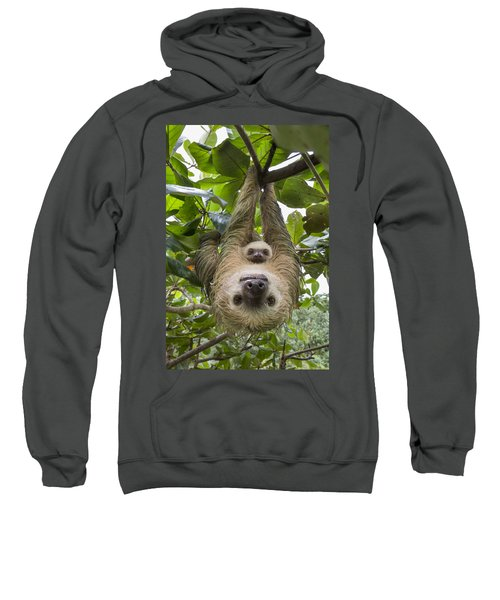 Hoffmanns Two-toed Sloth And Old Baby Sweatshirt