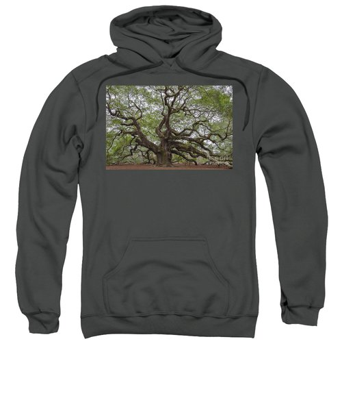 Sc Angel Oak Tree Sweatshirt