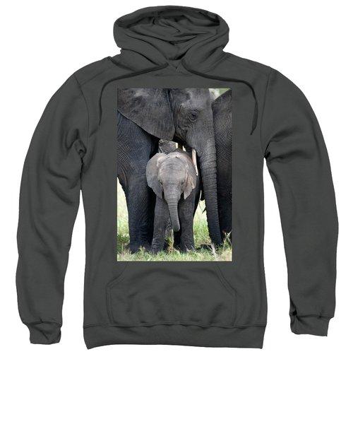 African Elephant Loxodonta Africana Sweatshirt