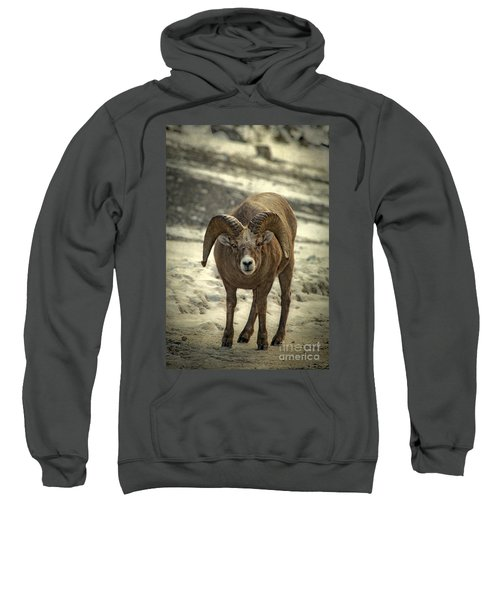 A Close Encounter Sweatshirt
