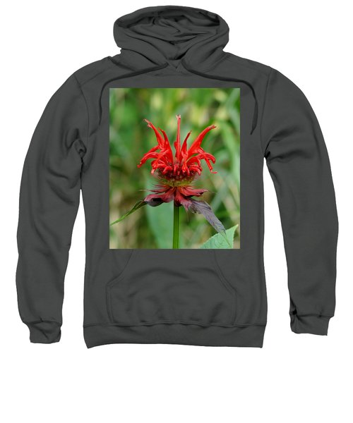 Sweatshirt featuring the photograph A Flowering Red Castle Beauty by Kim Pate