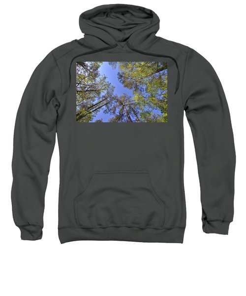 A Forest Sky Sweatshirt