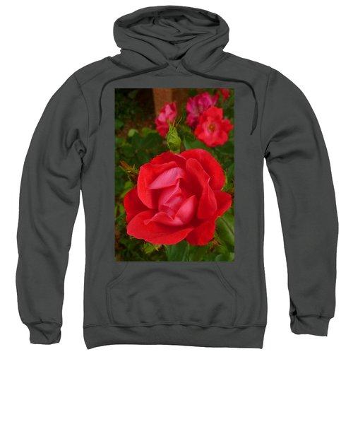 A Knockout Sweatshirt