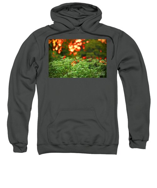 A Love Bug Sunset Sweatshirt