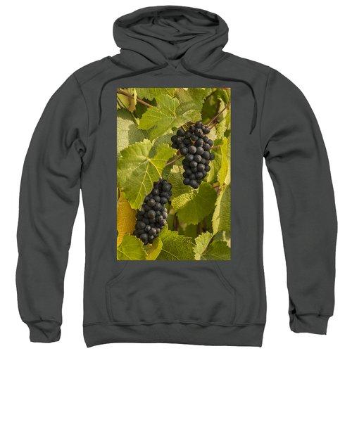 A Pair Of Clusters Sweatshirt
