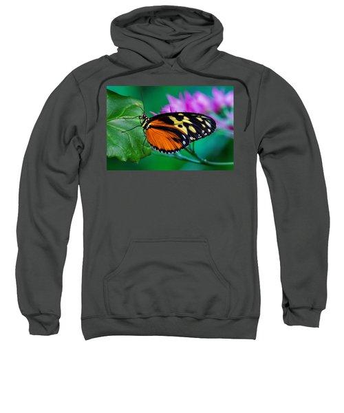 A Splash Of Colour Sweatshirt